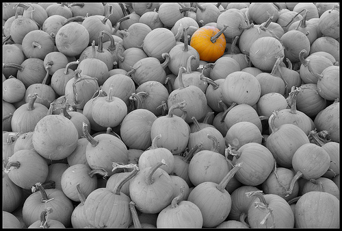 Pumpkin stands out