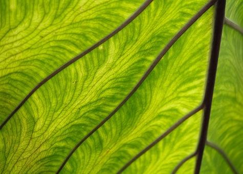 Green leaf - alien skin